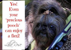 Even your pooch?